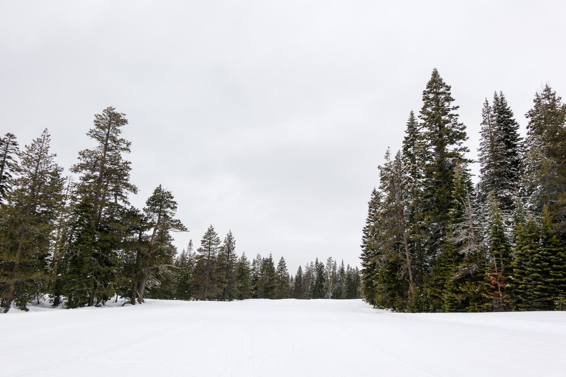 2019.03.22 Snowy Tahoe © Jennifer Carr Photography-2.jpg