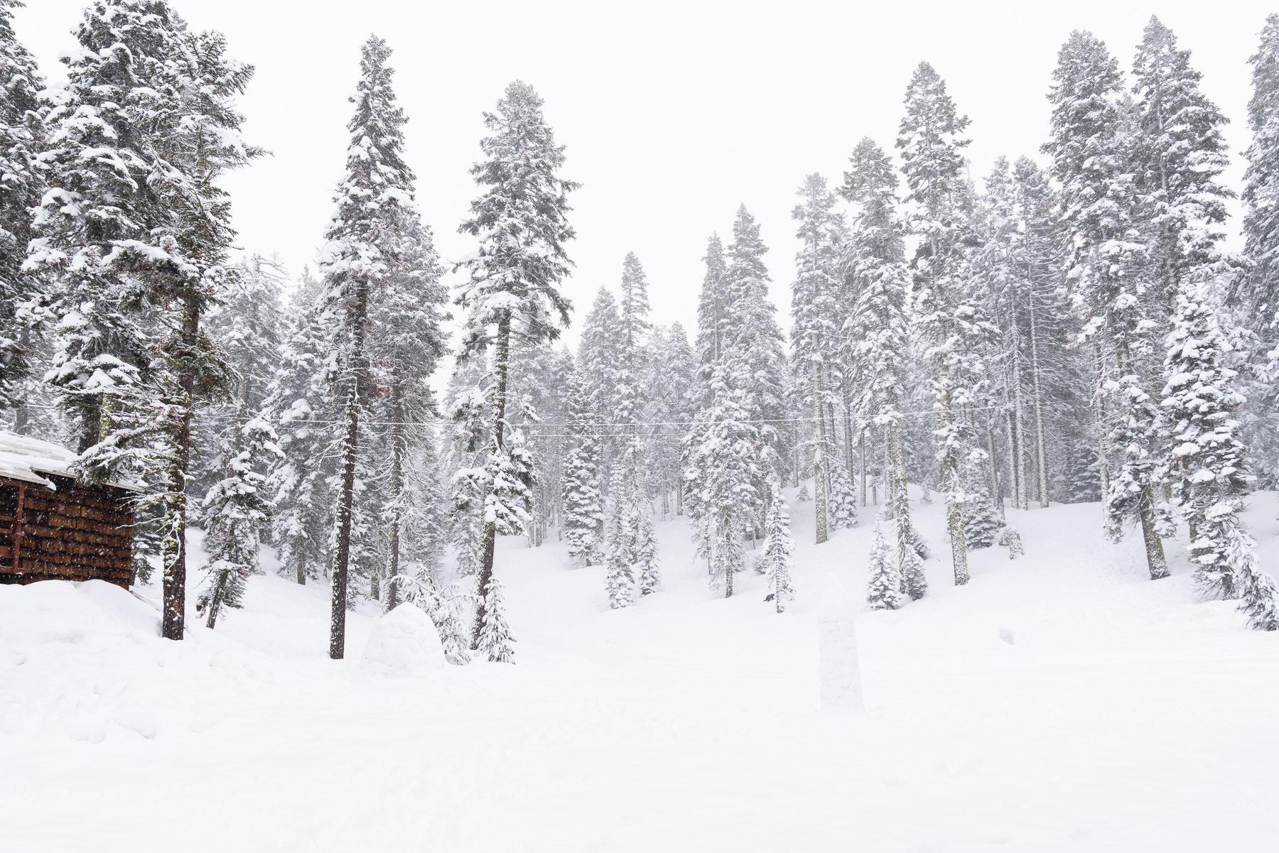 2019.03.23 Snowy Tahoe © Jennifer Carr Photography-8.jpg