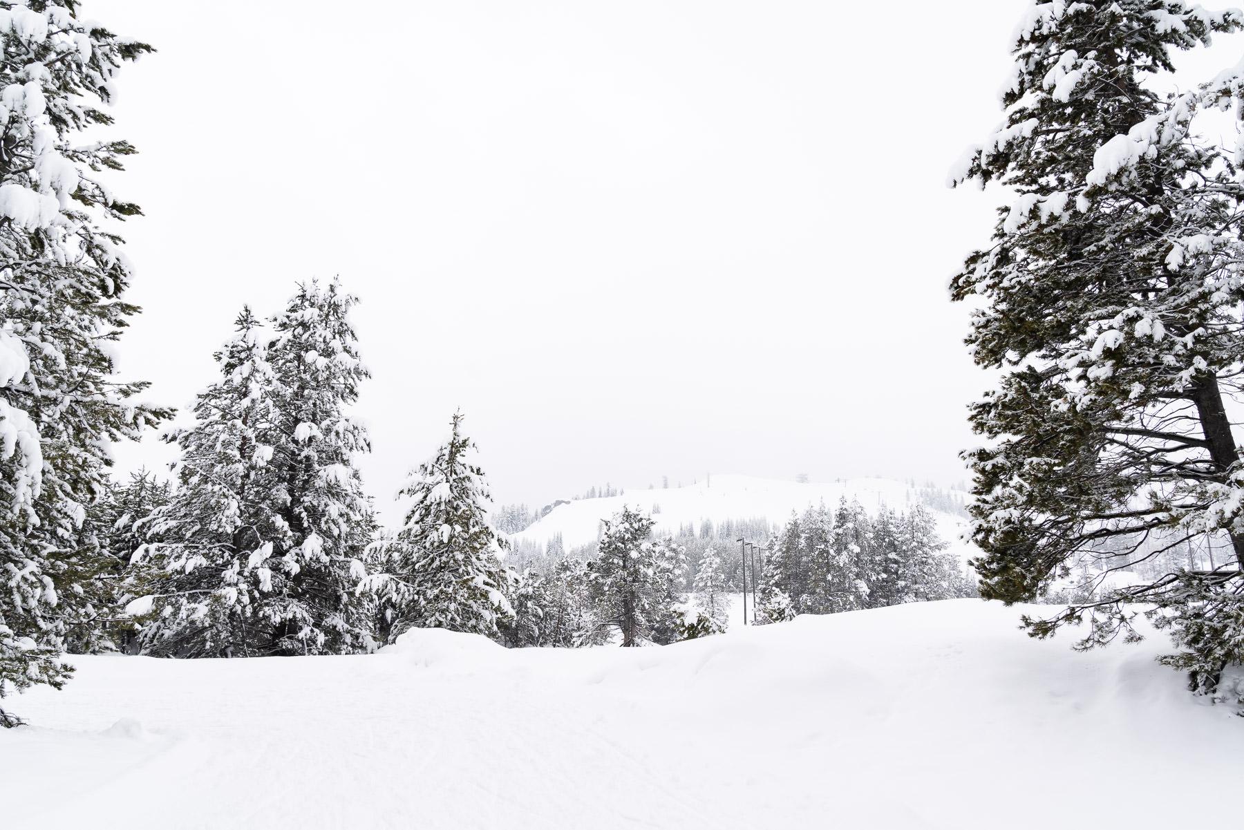 2019.03.23 Snowy Tahoe © Jennifer Carr Photography-14.jpg