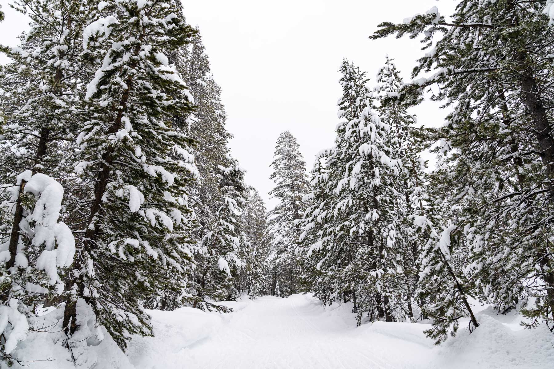 2019.03.23 Snowy Tahoe © Jennifer Carr Photography-15.jpg