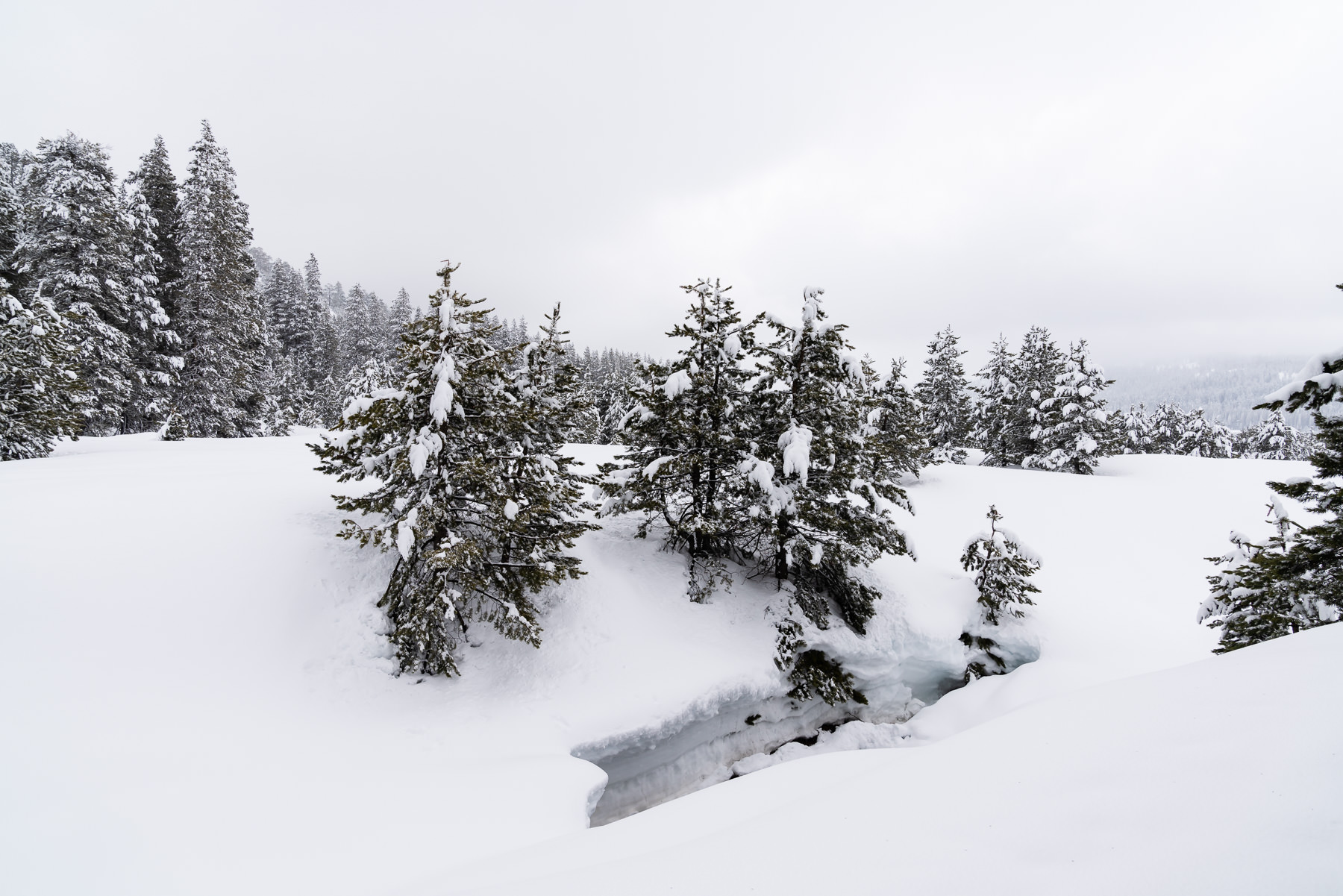 2019.03.23 Snowy Tahoe © Jennifer Carr Photography-16.jpg
