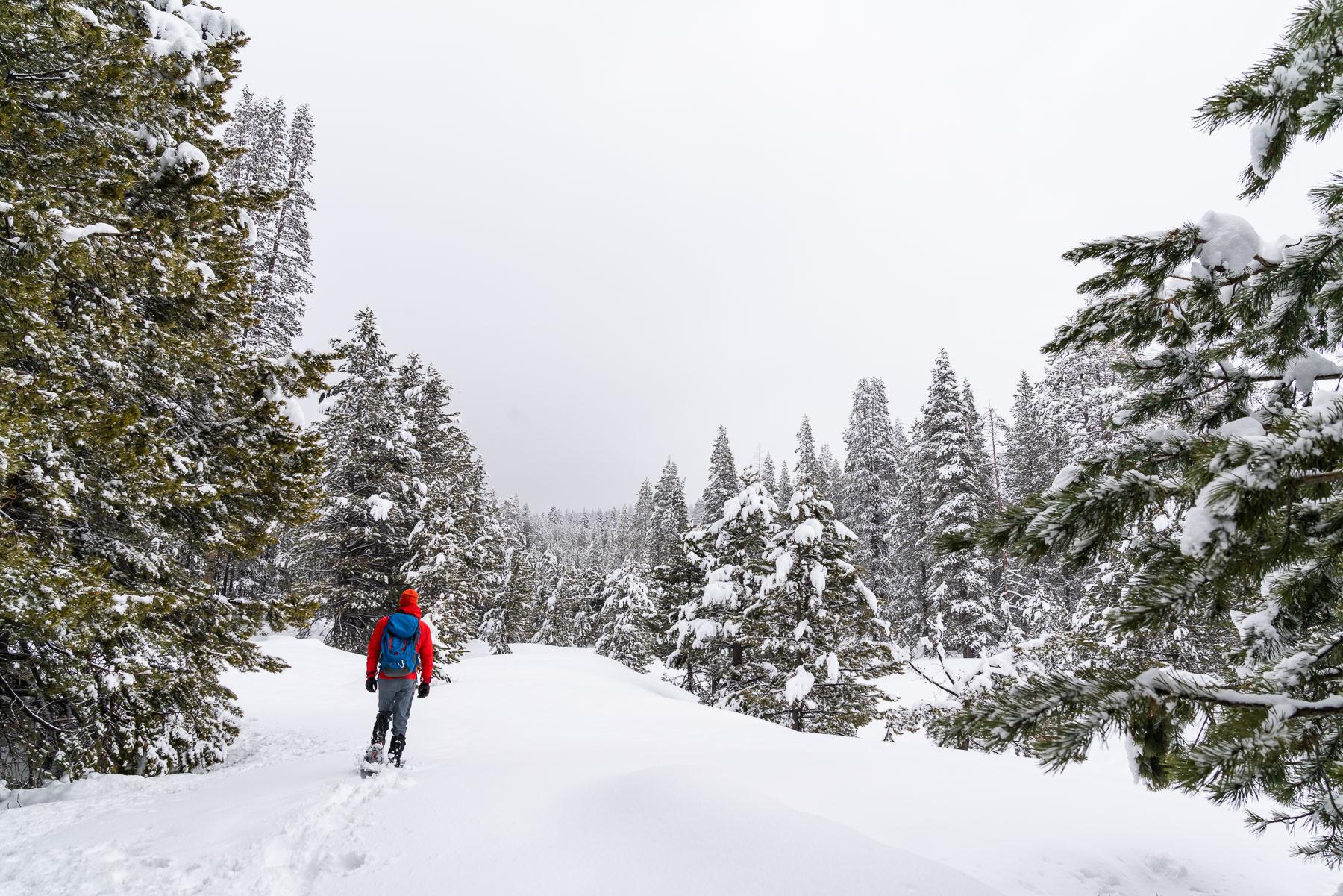 2019.03.23 Snowy Tahoe © Jennifer Carr Photography-17.jpg
