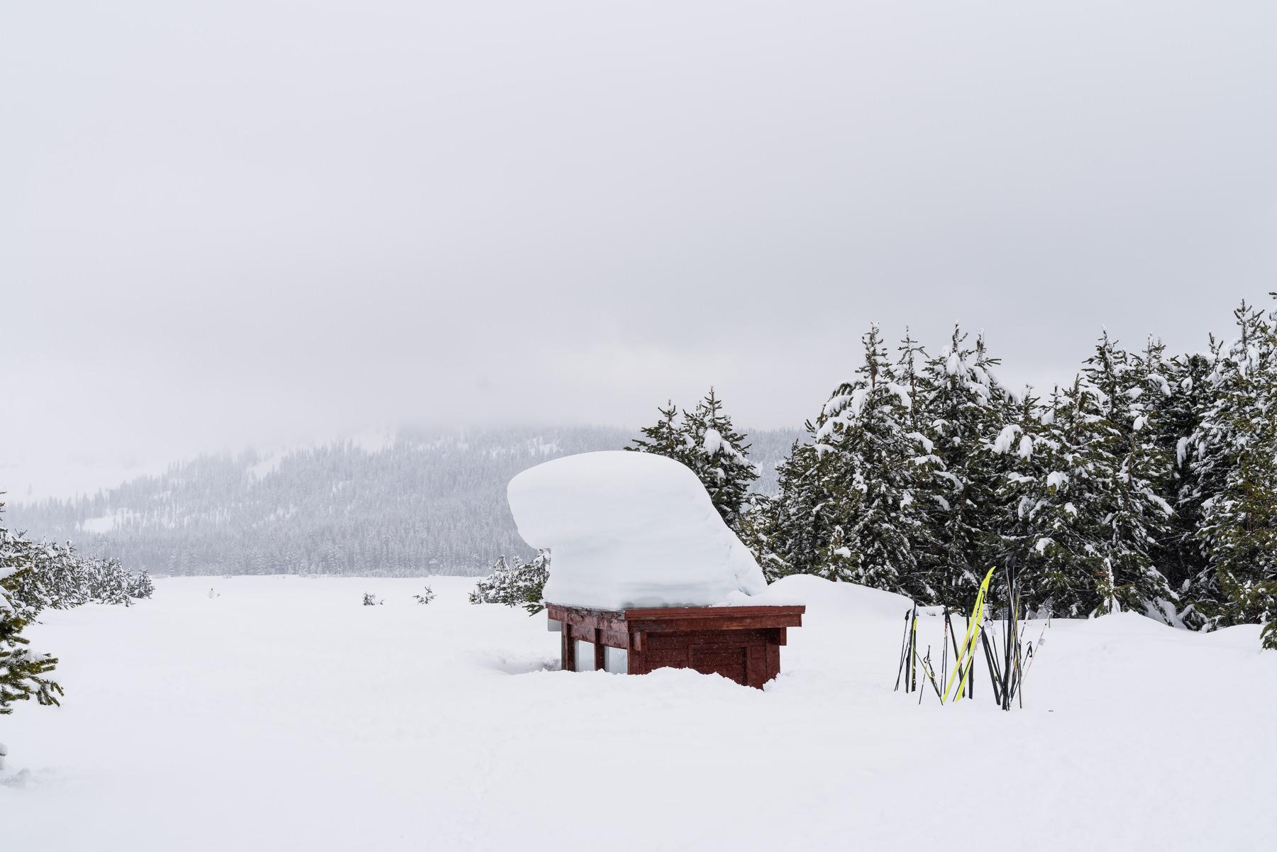 2019.03.23 Snowy Tahoe © Jennifer Carr Photography-18.jpg