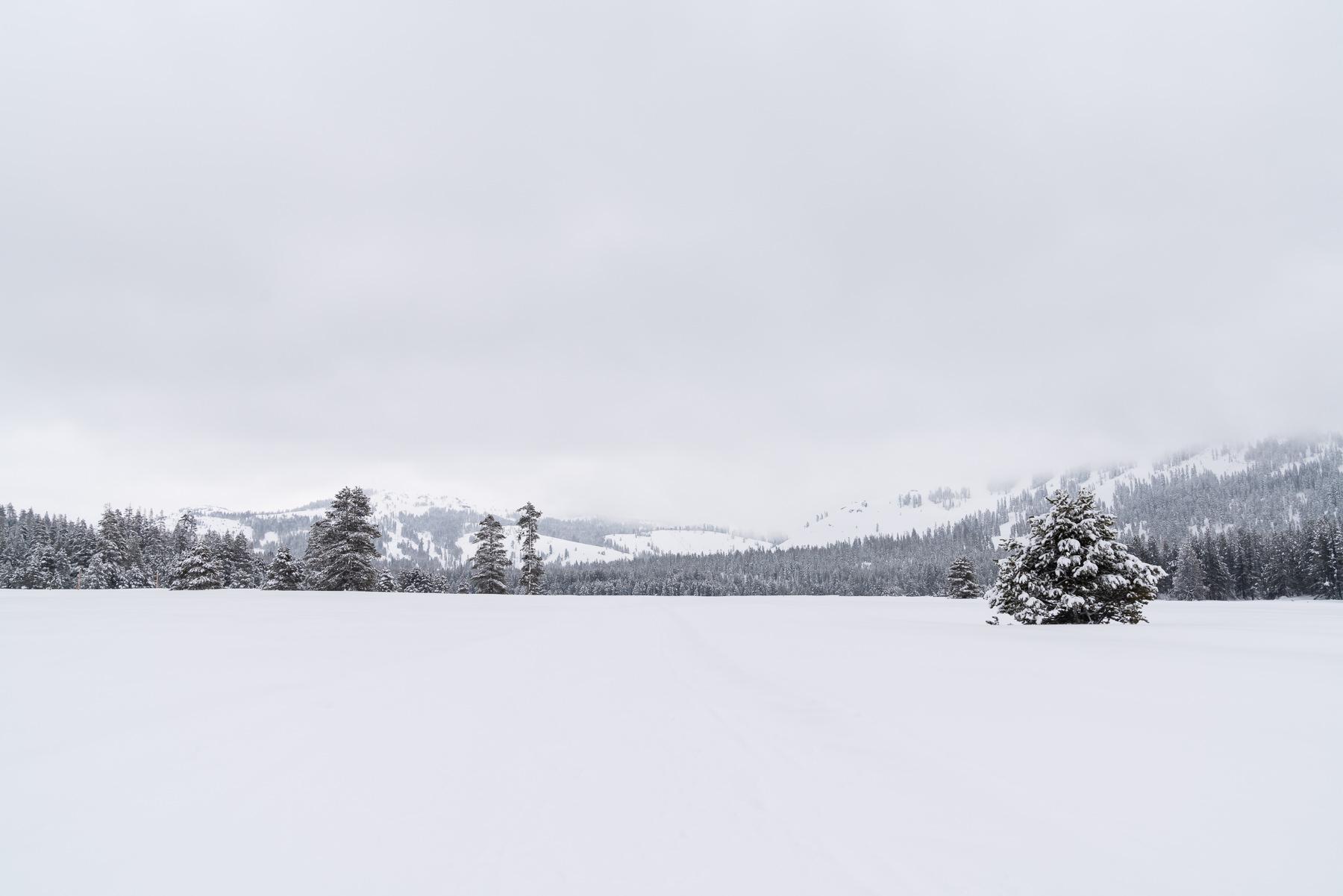 2019.03.23 Snowy Tahoe © Jennifer Carr Photography-24.jpg