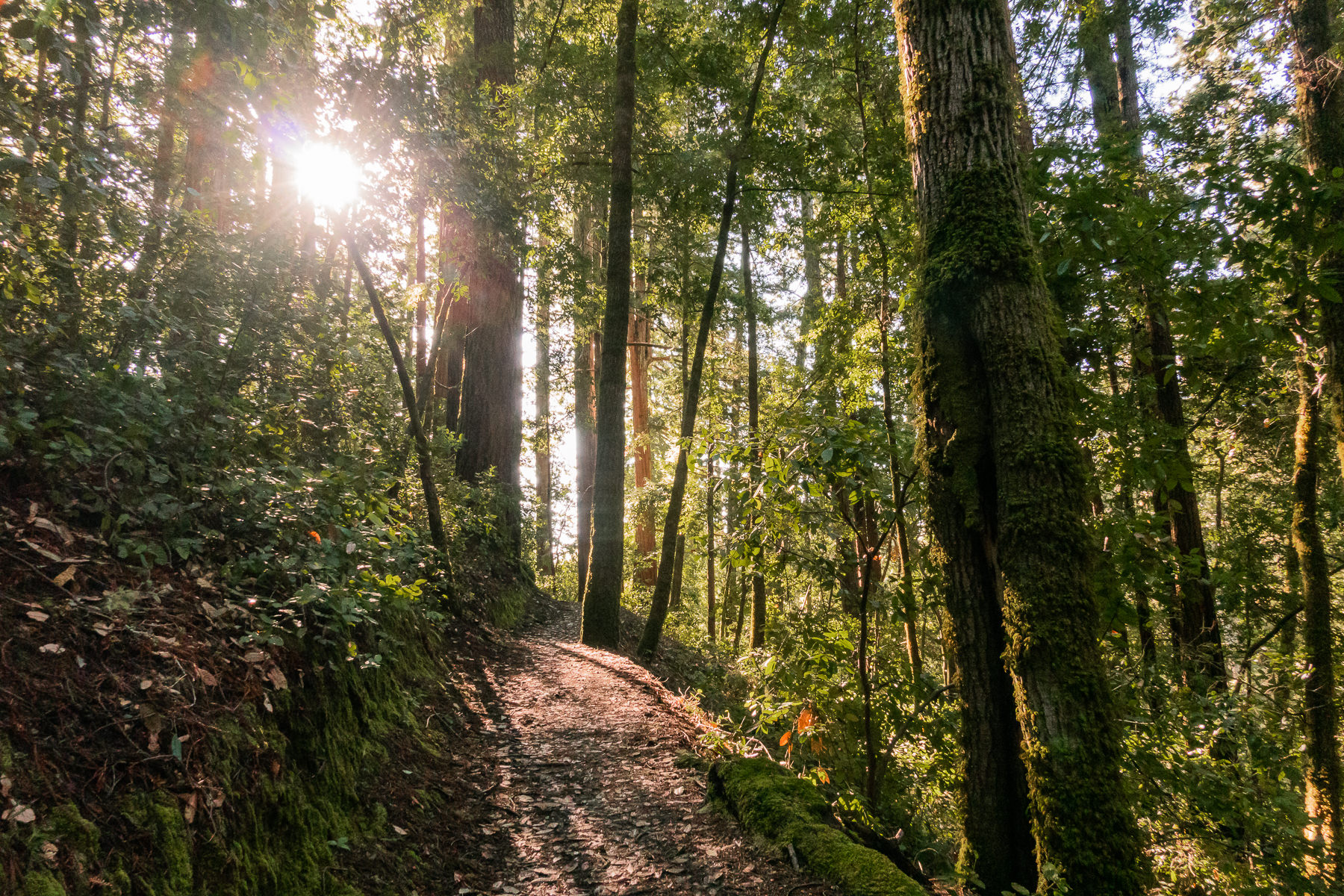 2019.03.30 Big Basin Redwoods State Park © Jennifer Carr Photography-2.jpg