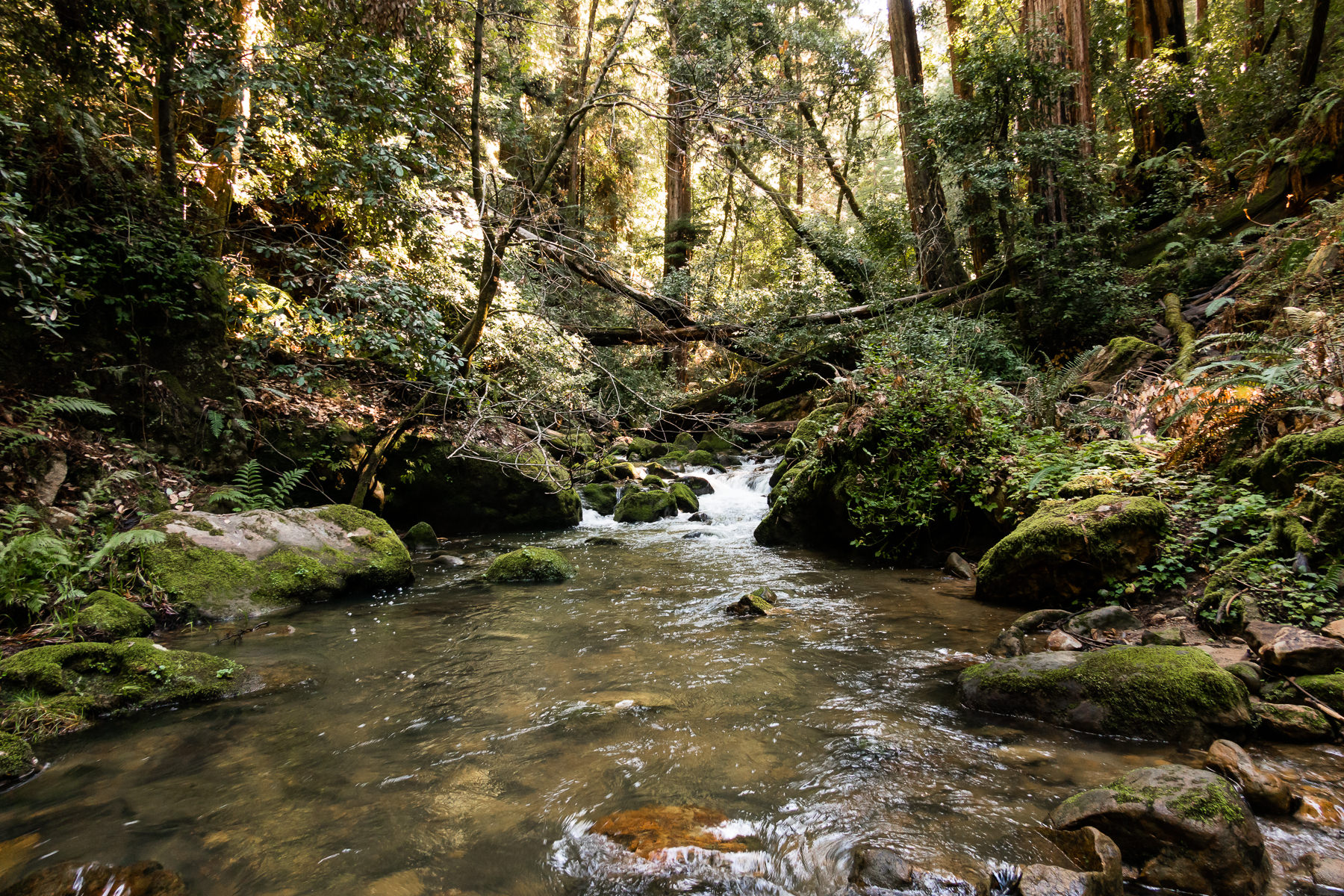 2019.03.30 Big Basin Redwoods State Park © Jennifer Carr Photography-13.jpg