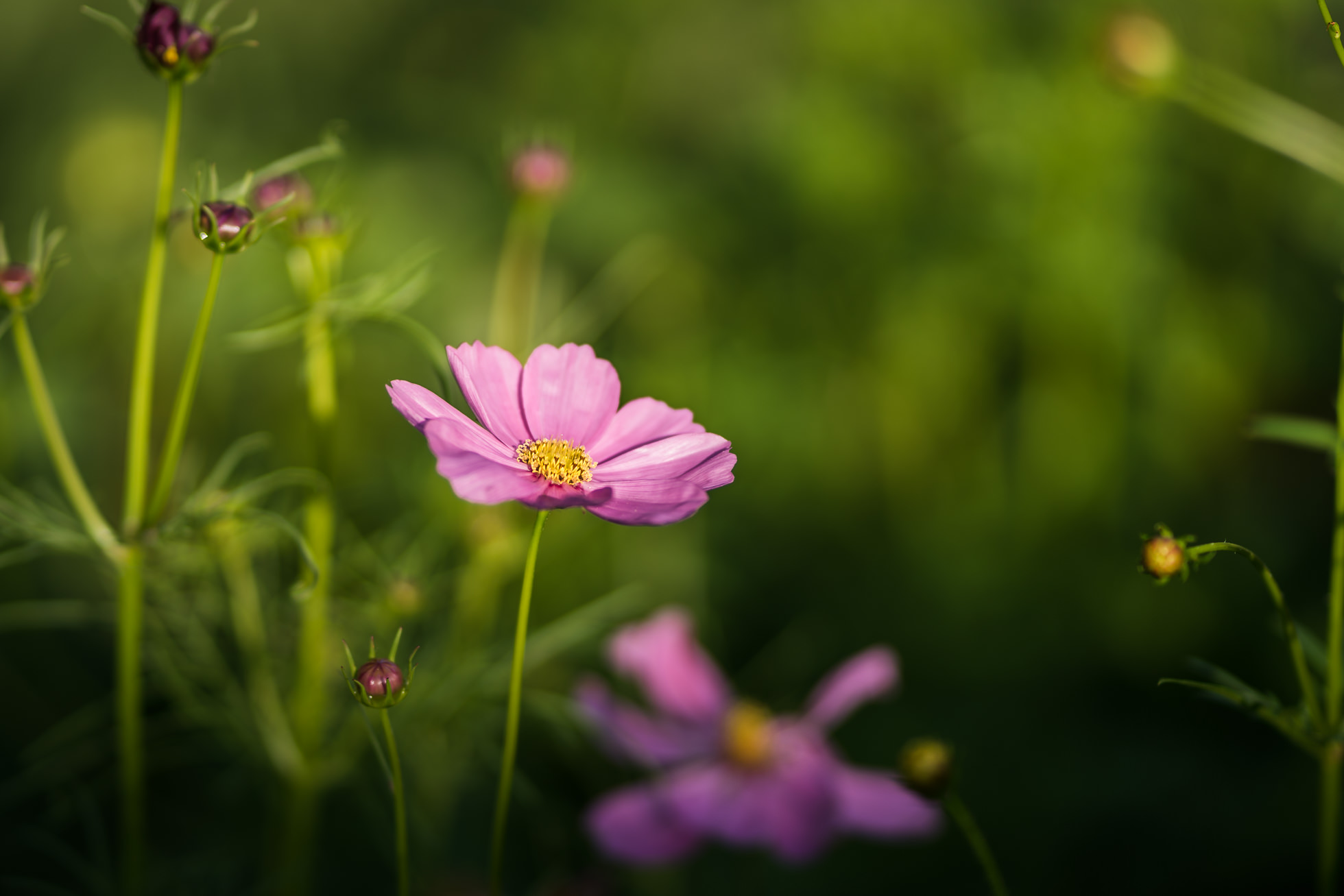 2018.06.05 Backyard Pollinator Garden by Jennifer Carr Photography Virginia Beach-13.jpg