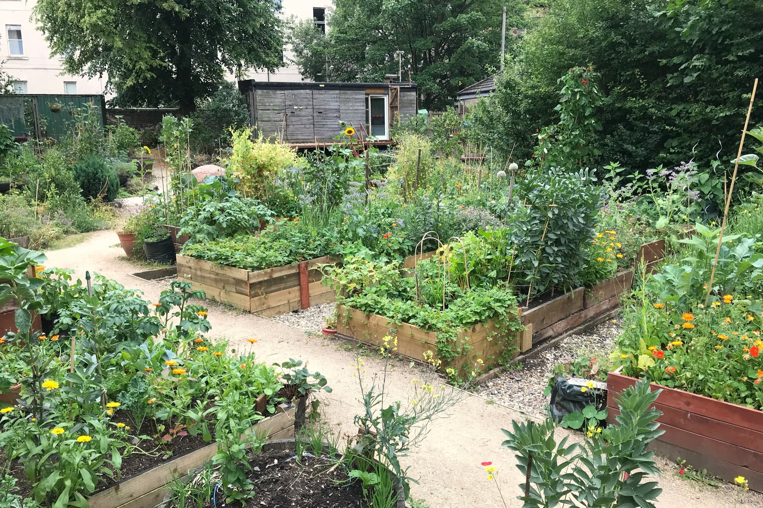 Woodlands Community Garden -