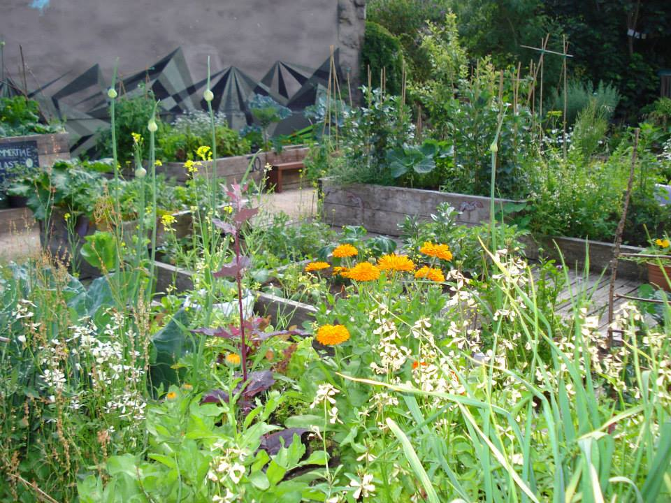 Abundant raised beds.jpg