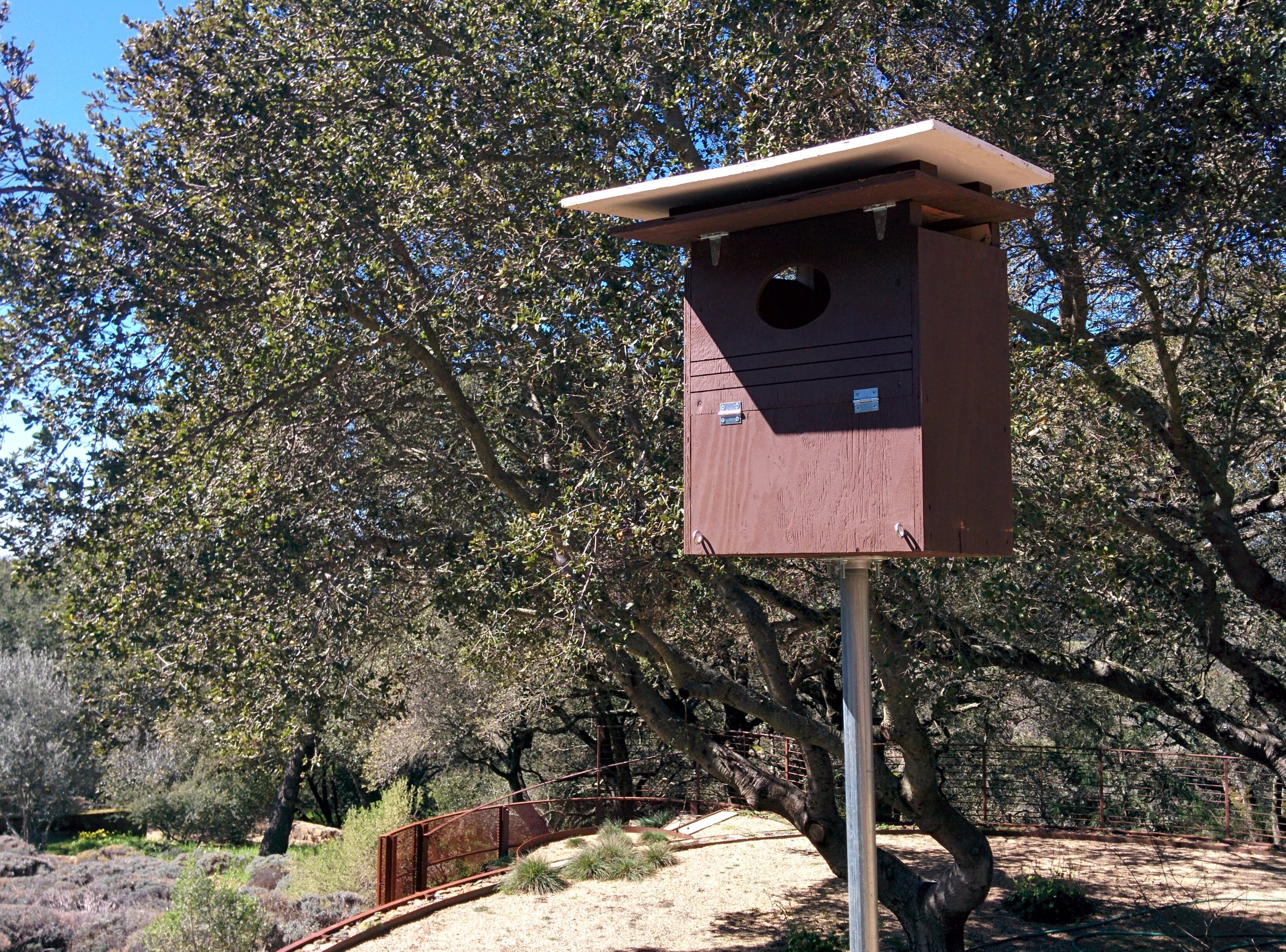 A Barn Owl box on a metal pole in Marin County, California.