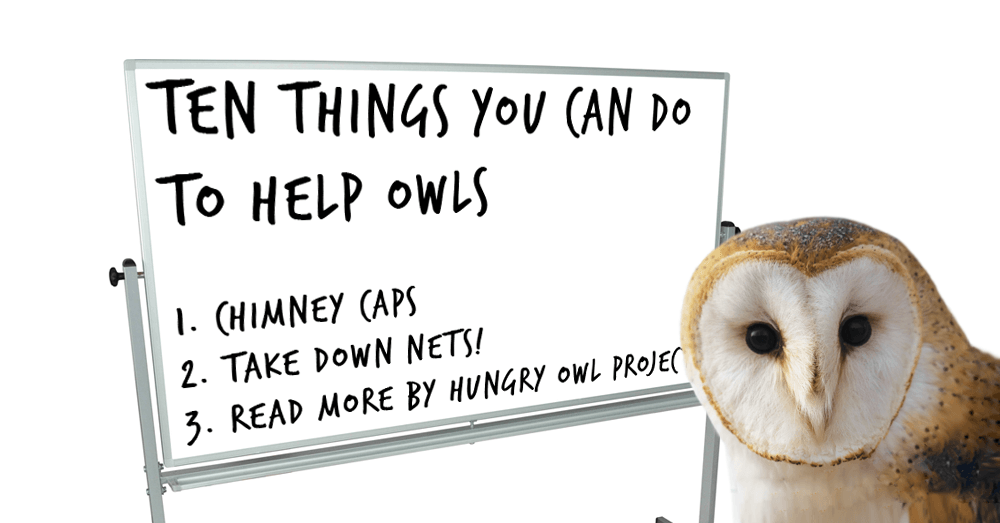 10-things-you-can-do-to-help-owls-social-image.png