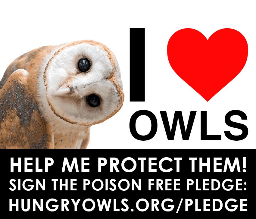 i-love-owls.png
