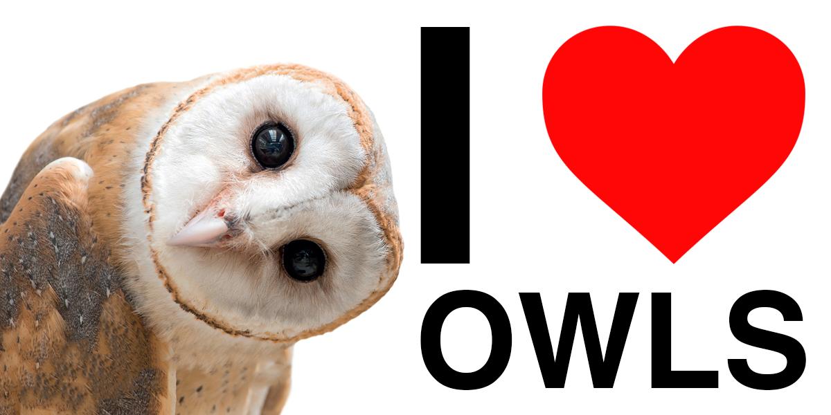 i-love-owls-twitter.png