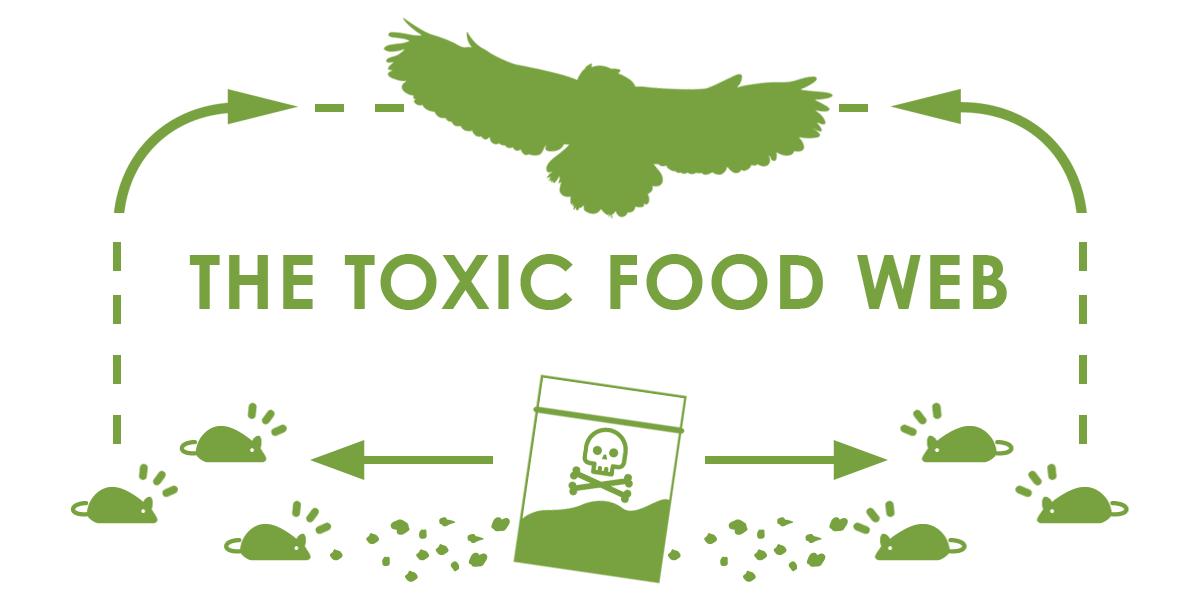 toxic-food-web.png