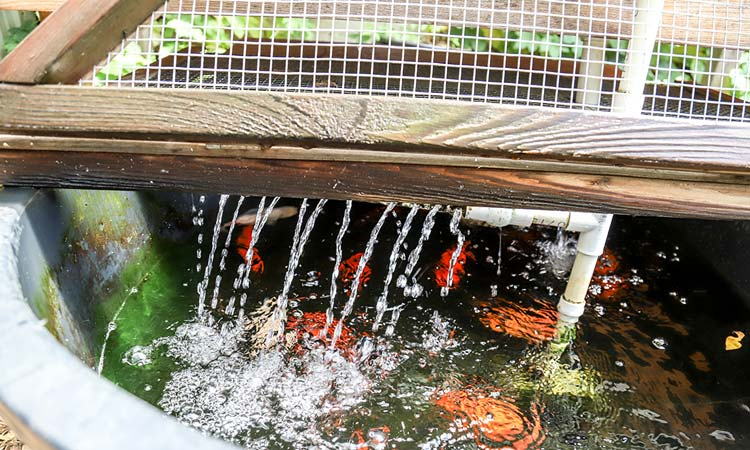 Aquaponics = Harmonious Cultivation of Plants with Fish