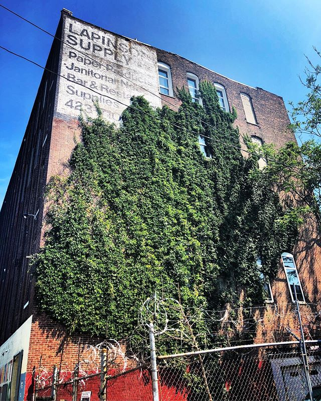 Yes our contractor says it's not good for the brick but, it's too beautiful. #nowayjose #ivyfordays 🌿🍃🌱🌿🍃 🌱 . . . #philadelphiaartist #phillyartist #kensingtonphilly #lovewhereyouwork #phillymaker #phillycrafter #artstudios #phillyartists #phillyart #artiststudios #philadelphia #artinphilly #phillyarts #phillyartcollective #practiceart #dowhatyoulove #phillymakers #phillytheater #phillyactor #phillycreatives #phillyphotographer #phillypainter #phillystudio #phillyphilly #phillylove #phillypride