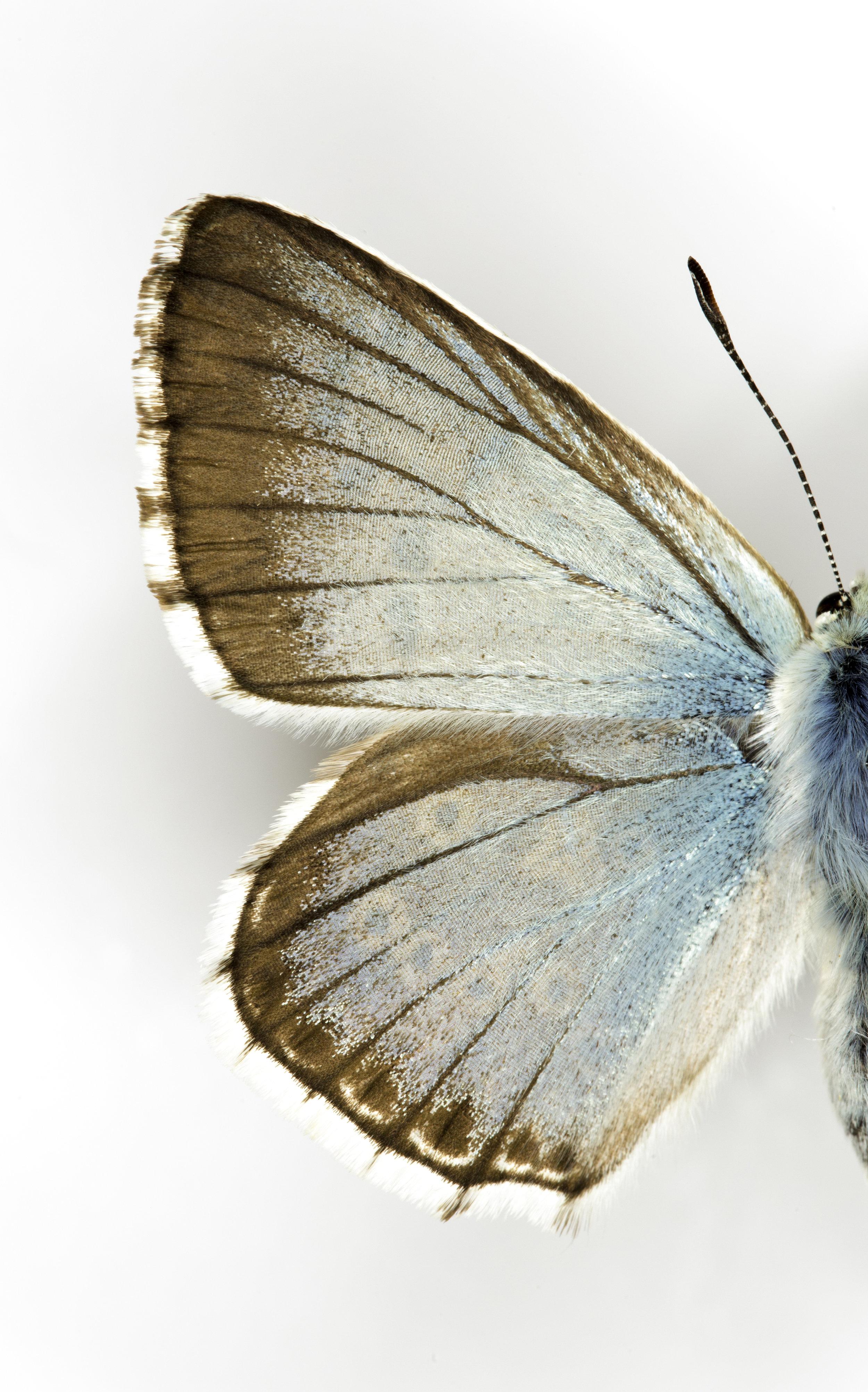 Macro Butterflies 3-0645-Edit.jpg