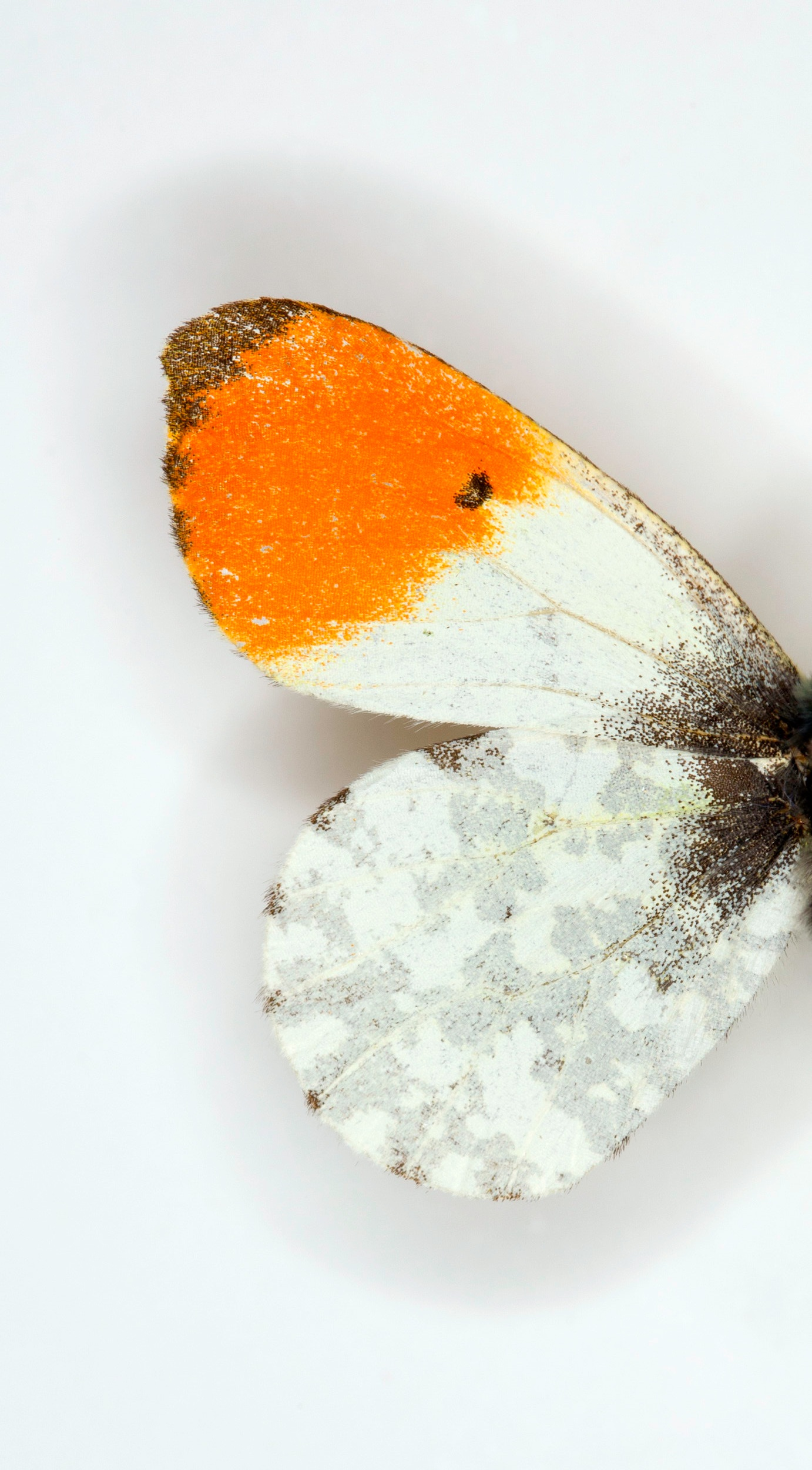 Macro Butterflies 3-044-Edit.jpg
