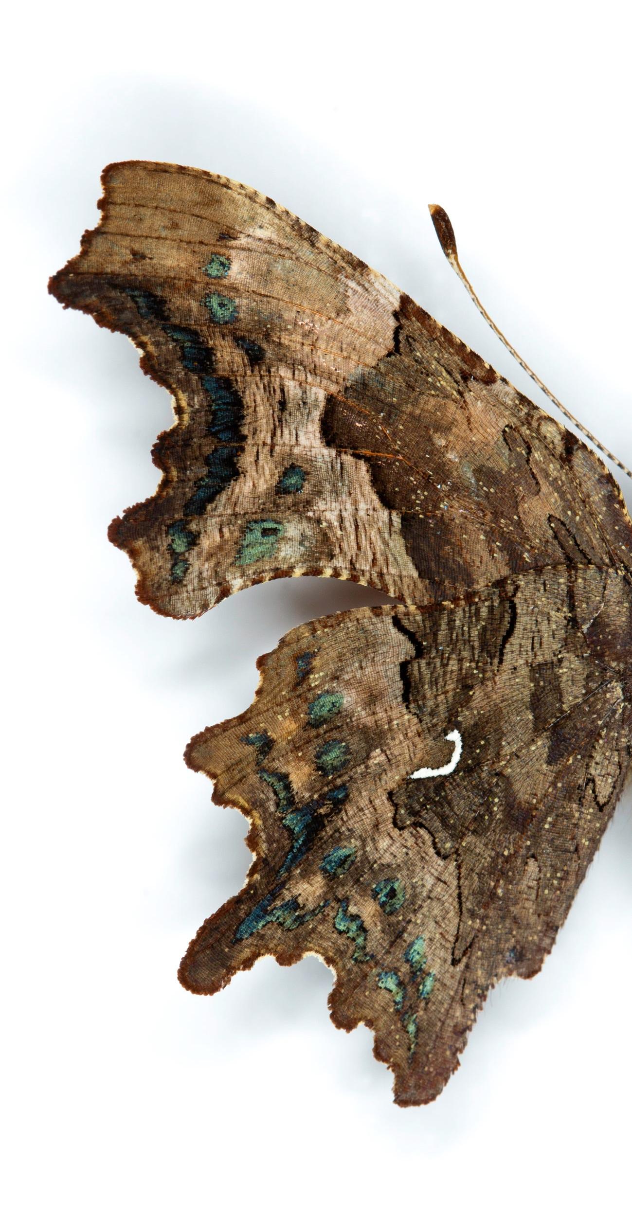 Macro Butterflies 3-062-Edit.jpg