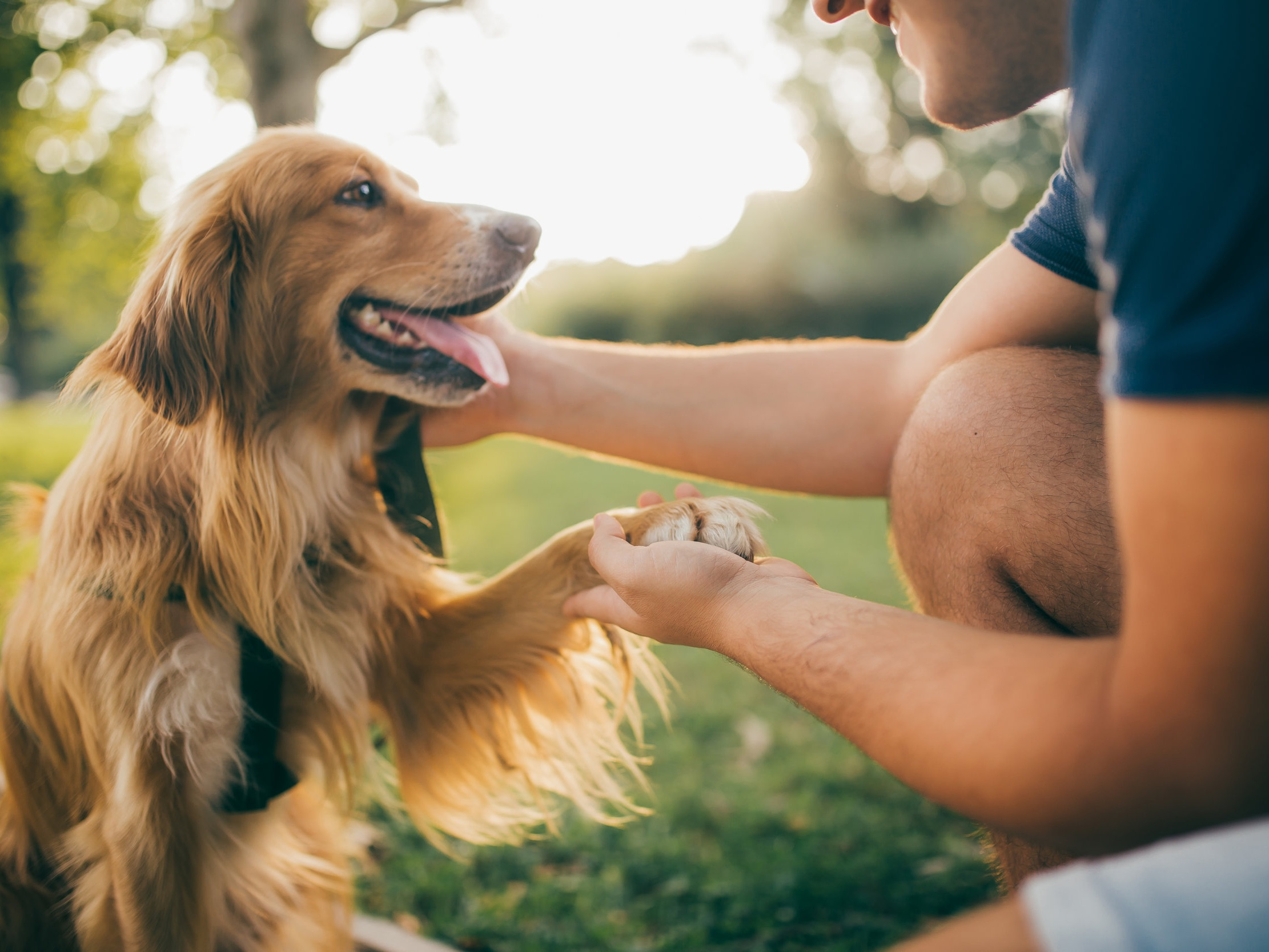 We Love Our Furry Friends! - We know that pets are your family too. That is why at IRET Properties, we offer pet friendly apartment living. All of our apartment communities are cat and dog friendly! We welcome you and your furry friends with open arms.