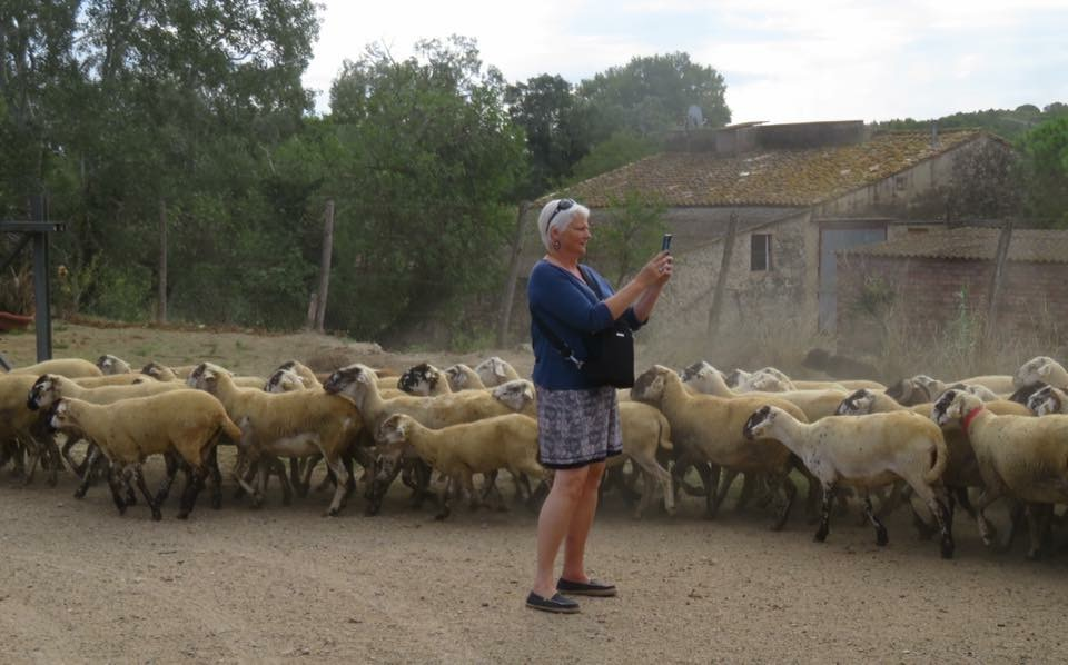 herdingsheep.jpg