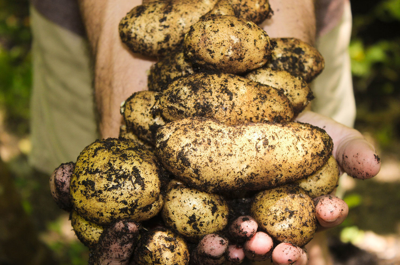 potatoes-1866415_1920-1500.jpg