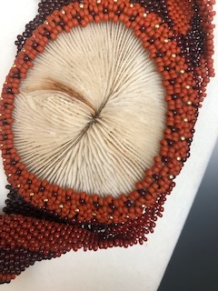 shell close up.jpg
