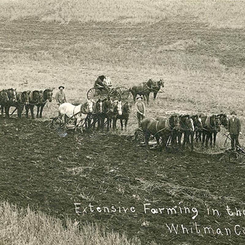 Whitman, 1911