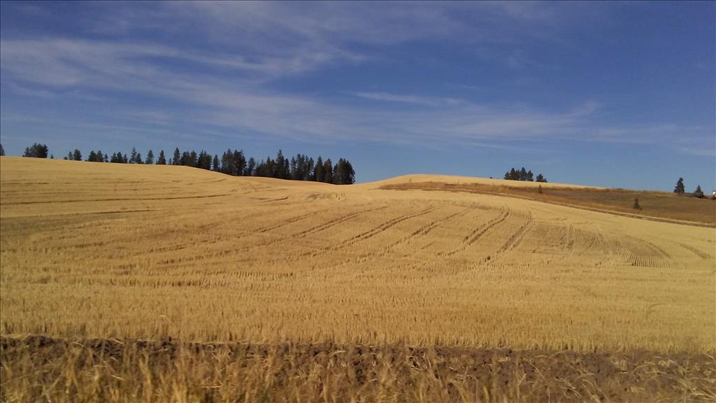 Wheat fields near city of Palouse, Whitman County, October 15, 2017   Photo by Colleen E. O'Connor
