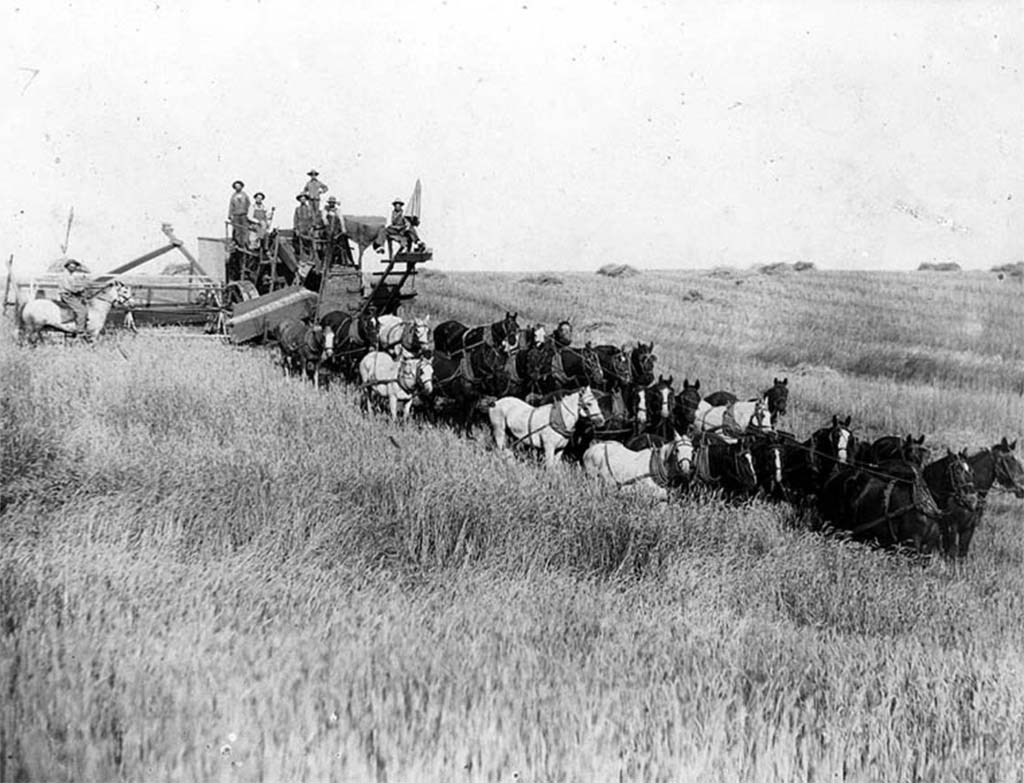 Wheat harvest, Lincoln County, 1911   Courtesy UW Special Collections (UW6888)