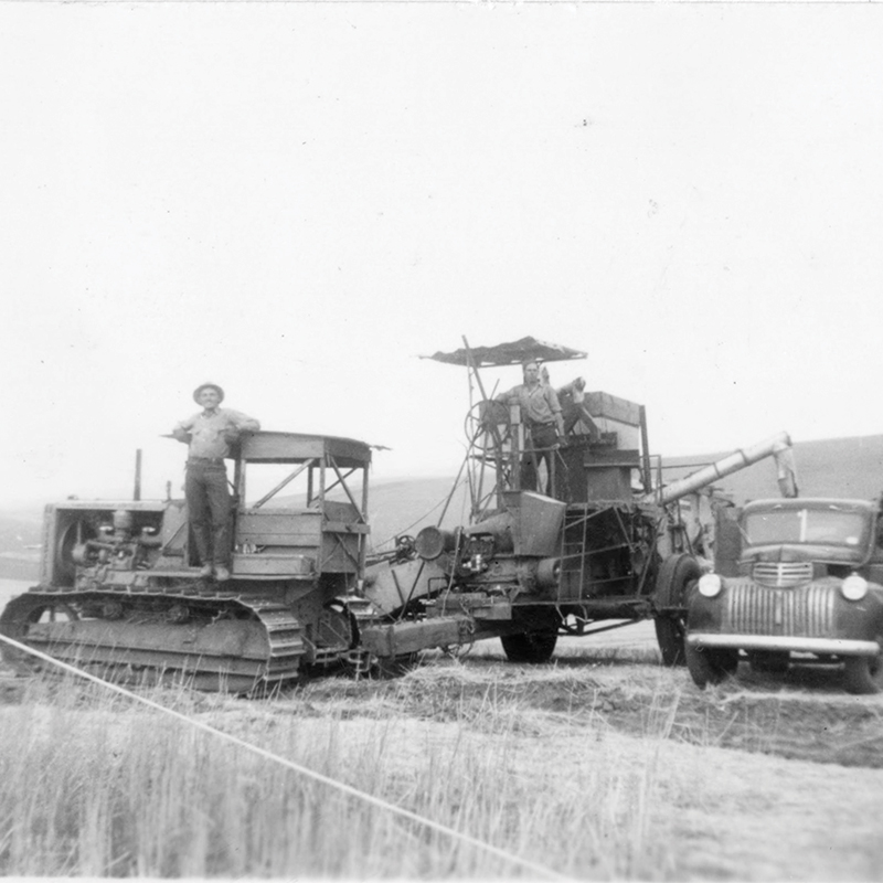 Riparia, 1941