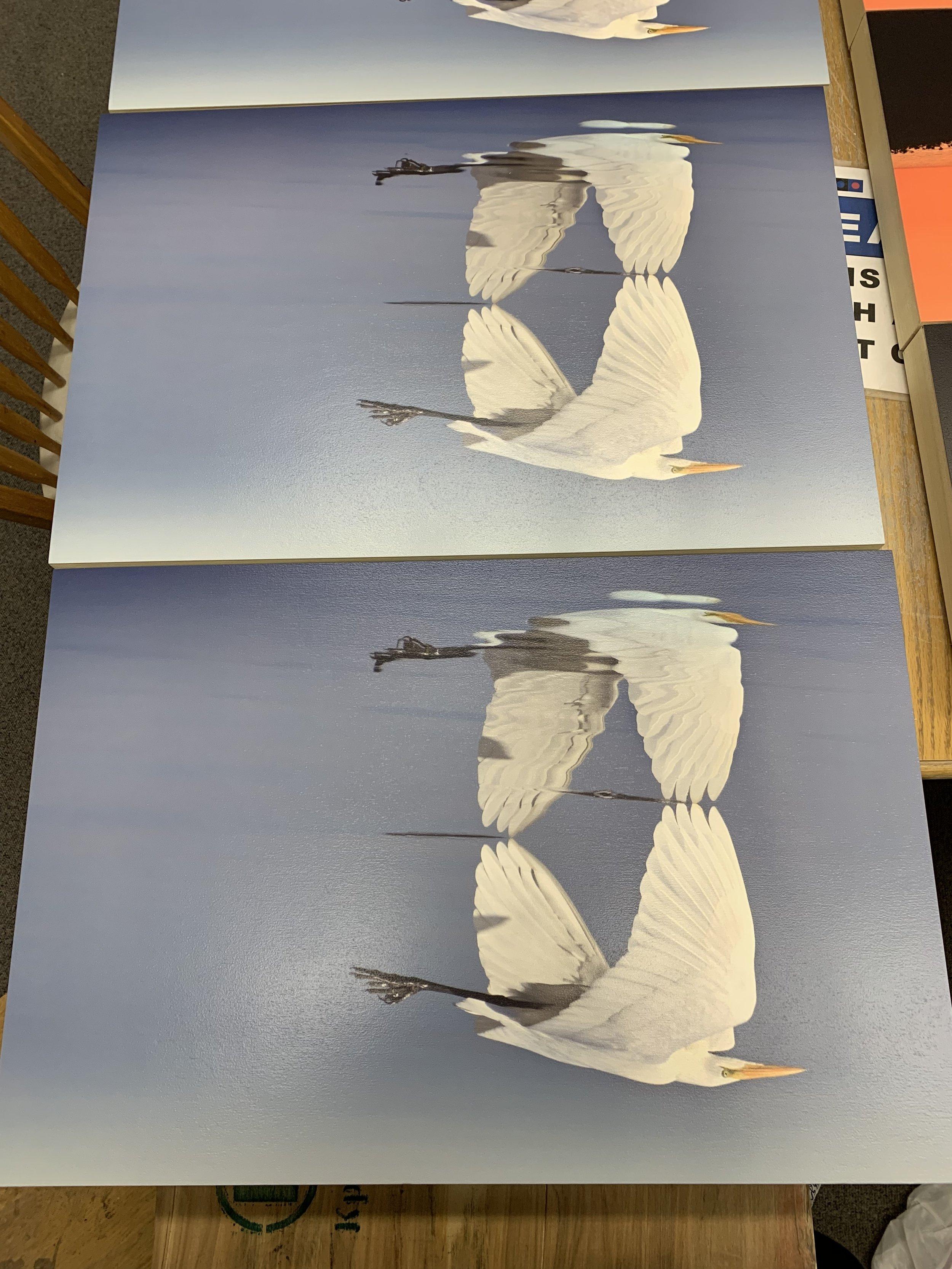 Egret Flight Reflection