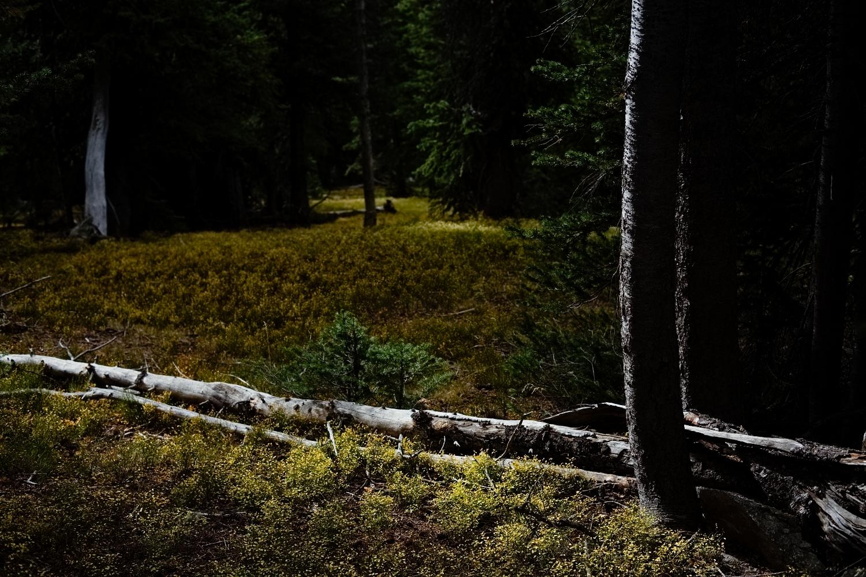 ForestTherapyHarvestLores009.JPG