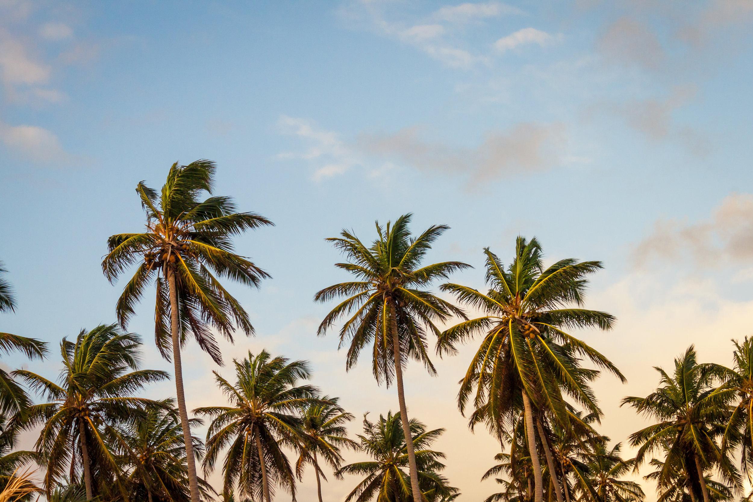 モロカイ島   手付かずの自然が残る島