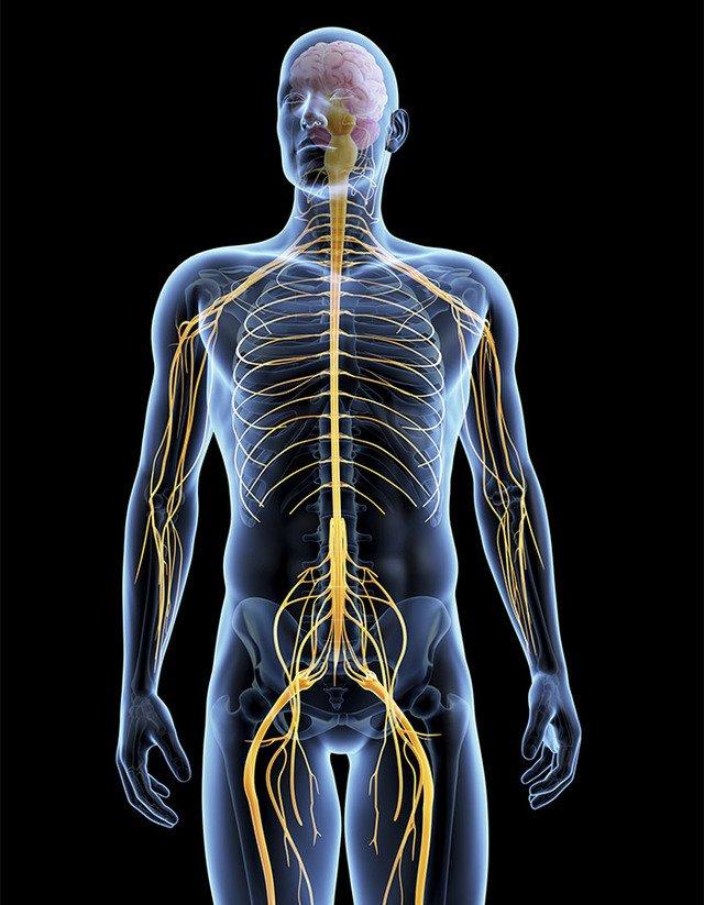 Musculoskeletal-system-700x900.jpg