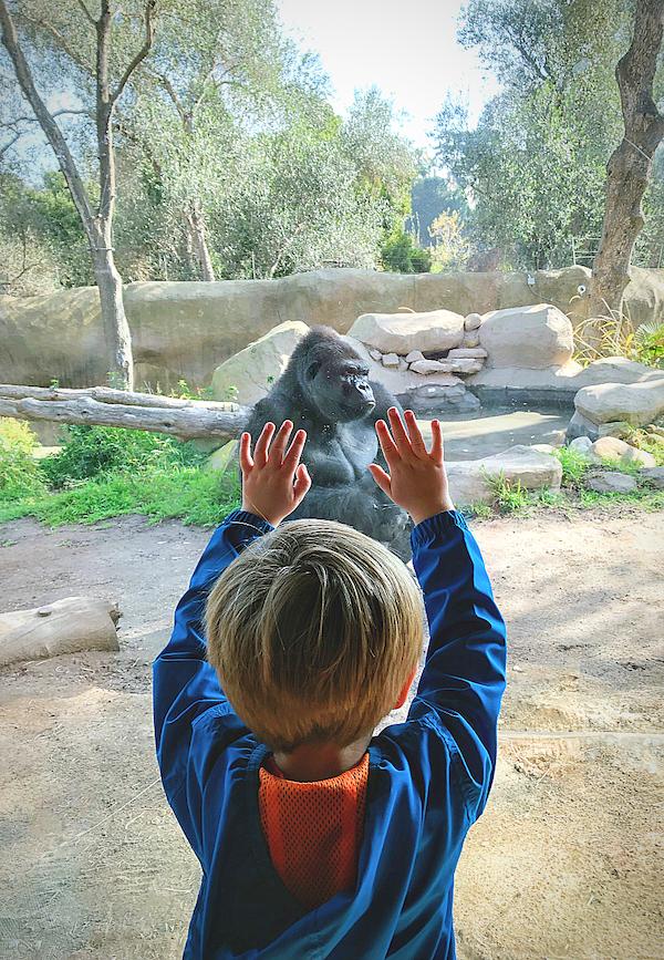 santa barbara zoo.jpg