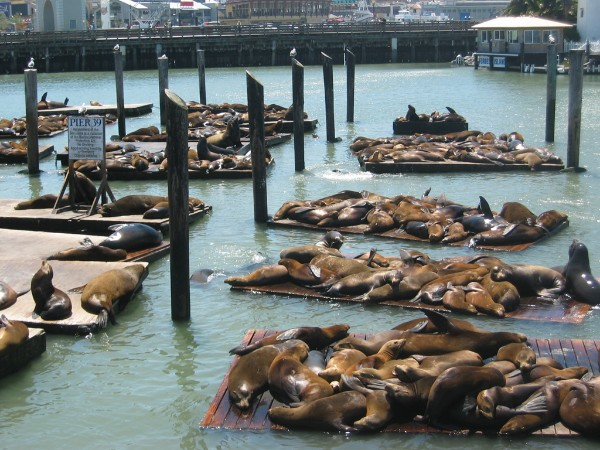 pier 39 sea lions - Edited.jpg