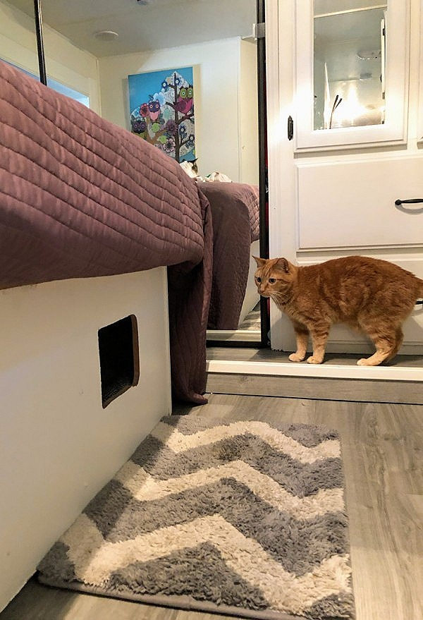 cat+beds+in+rv.jpg