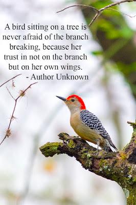 A bird sitting on a tree.jpg