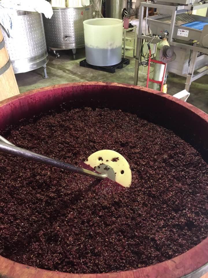 The fermentation process begins! -