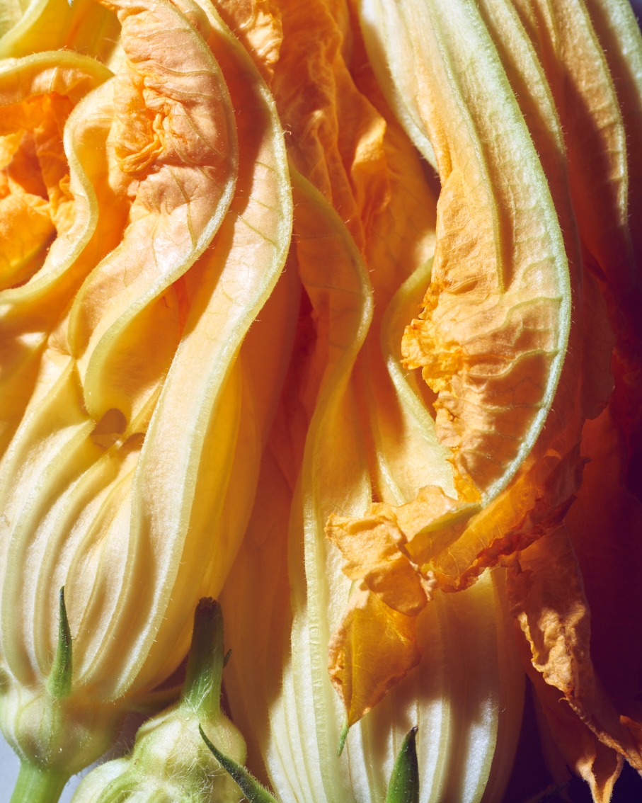 20180811_French_summer_courgette_flowers_003_Patricia_Niven.jpg