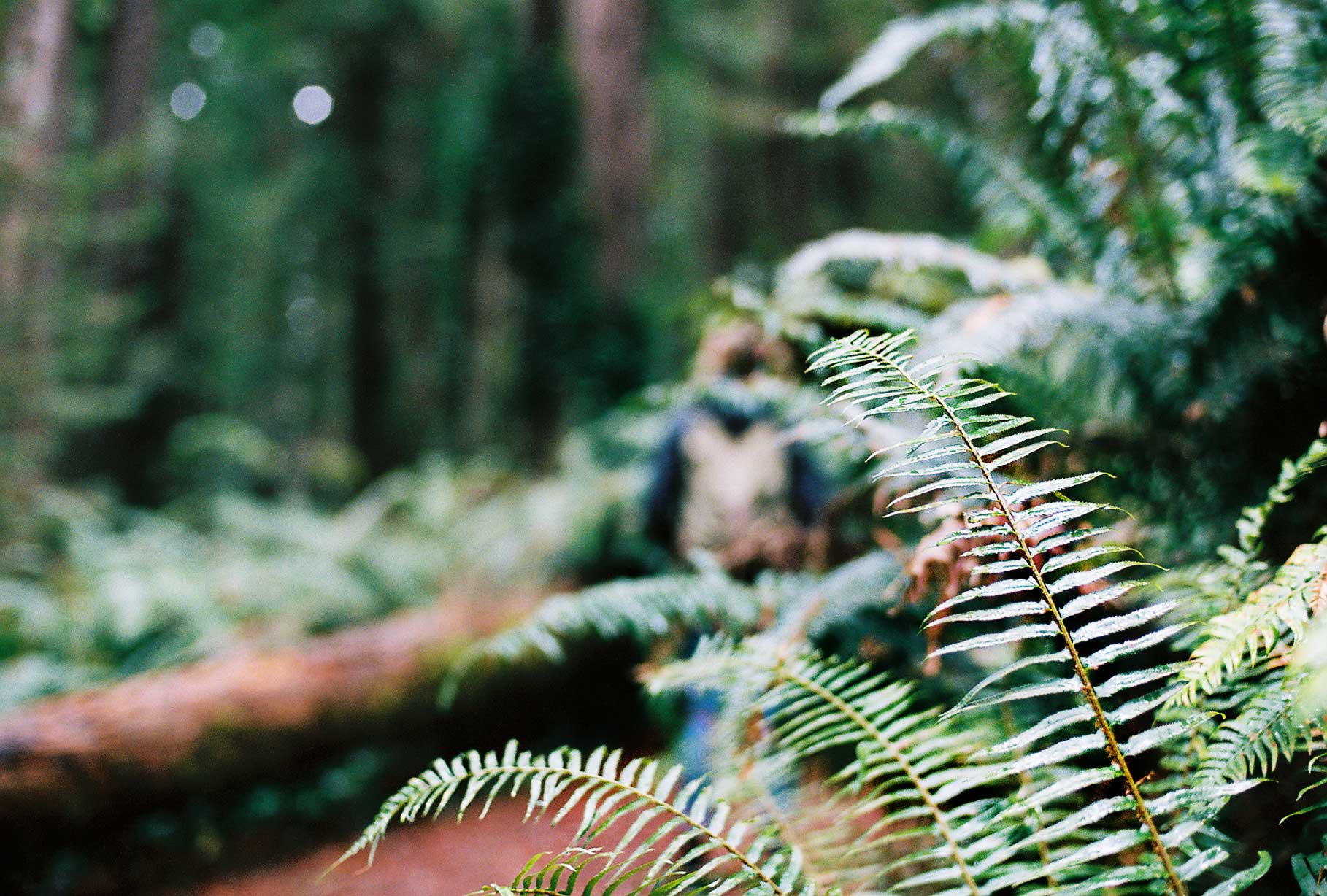 Long walks amongst the Redwood Trees, Humbodlt County, 2017.