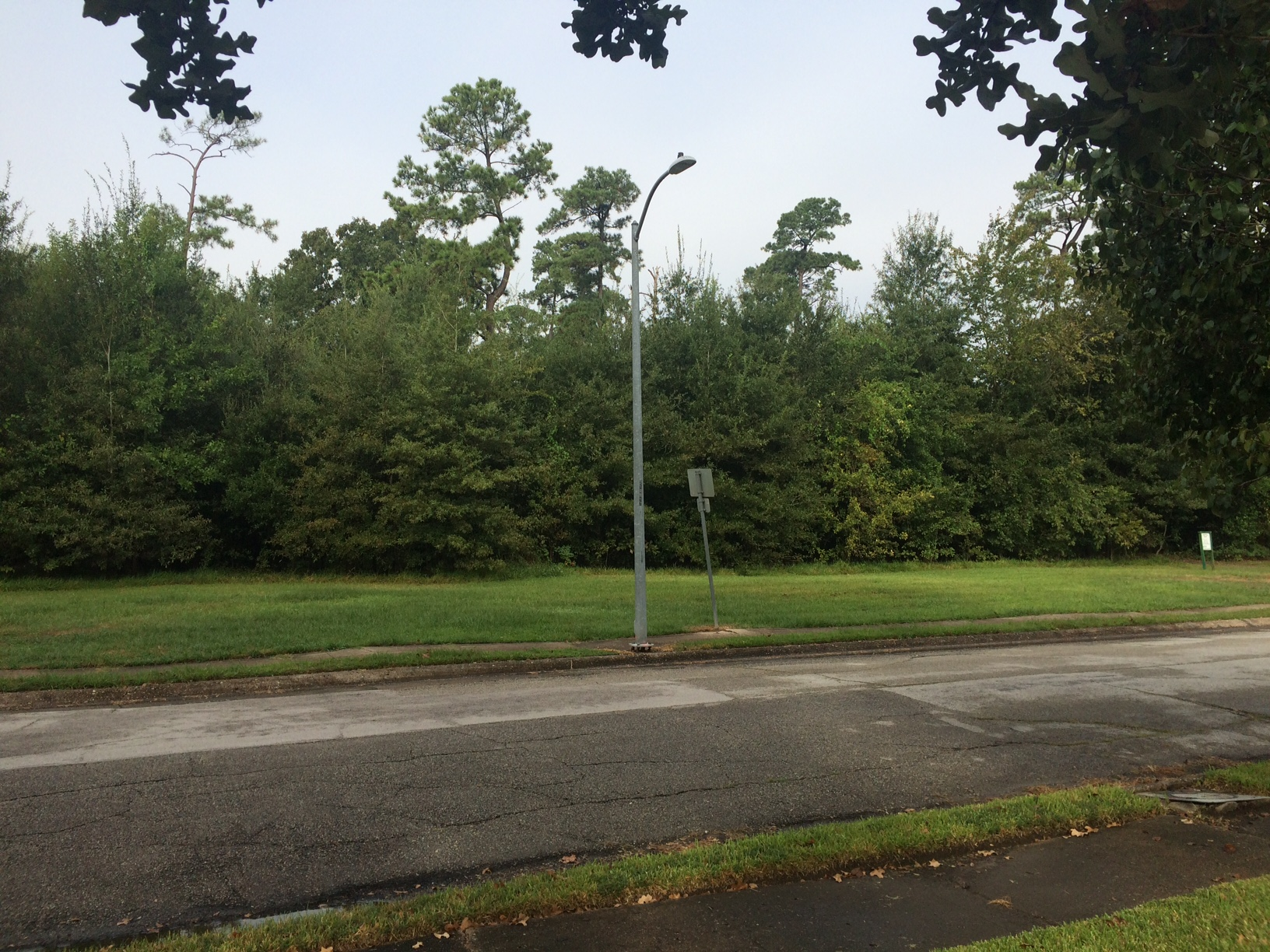 park-trees-20161015-b.jpg
