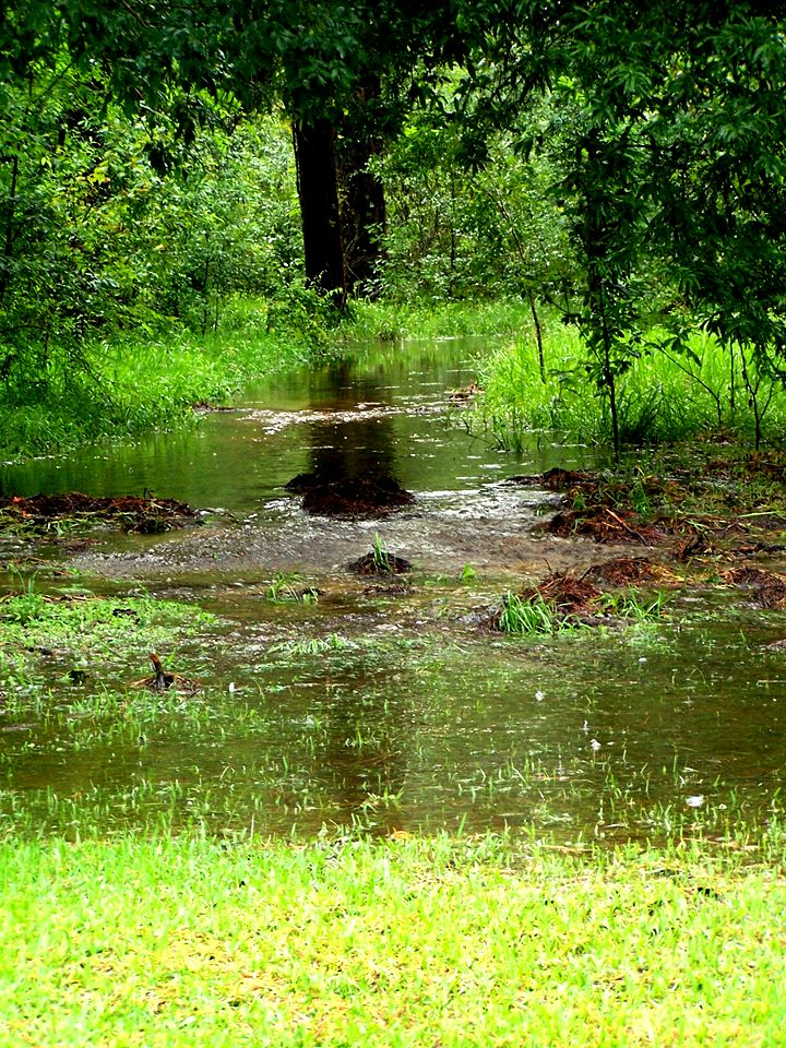 Trail-at-Shelterwood-and-Woodbrook-after-August-rainstorm-comp.jpg