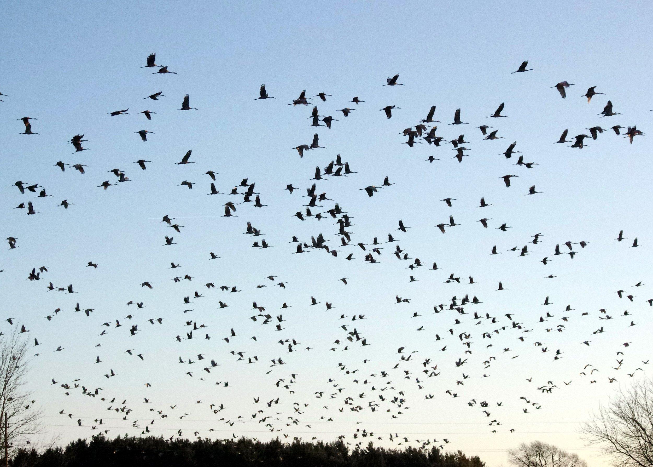 migrating-birds.jpg