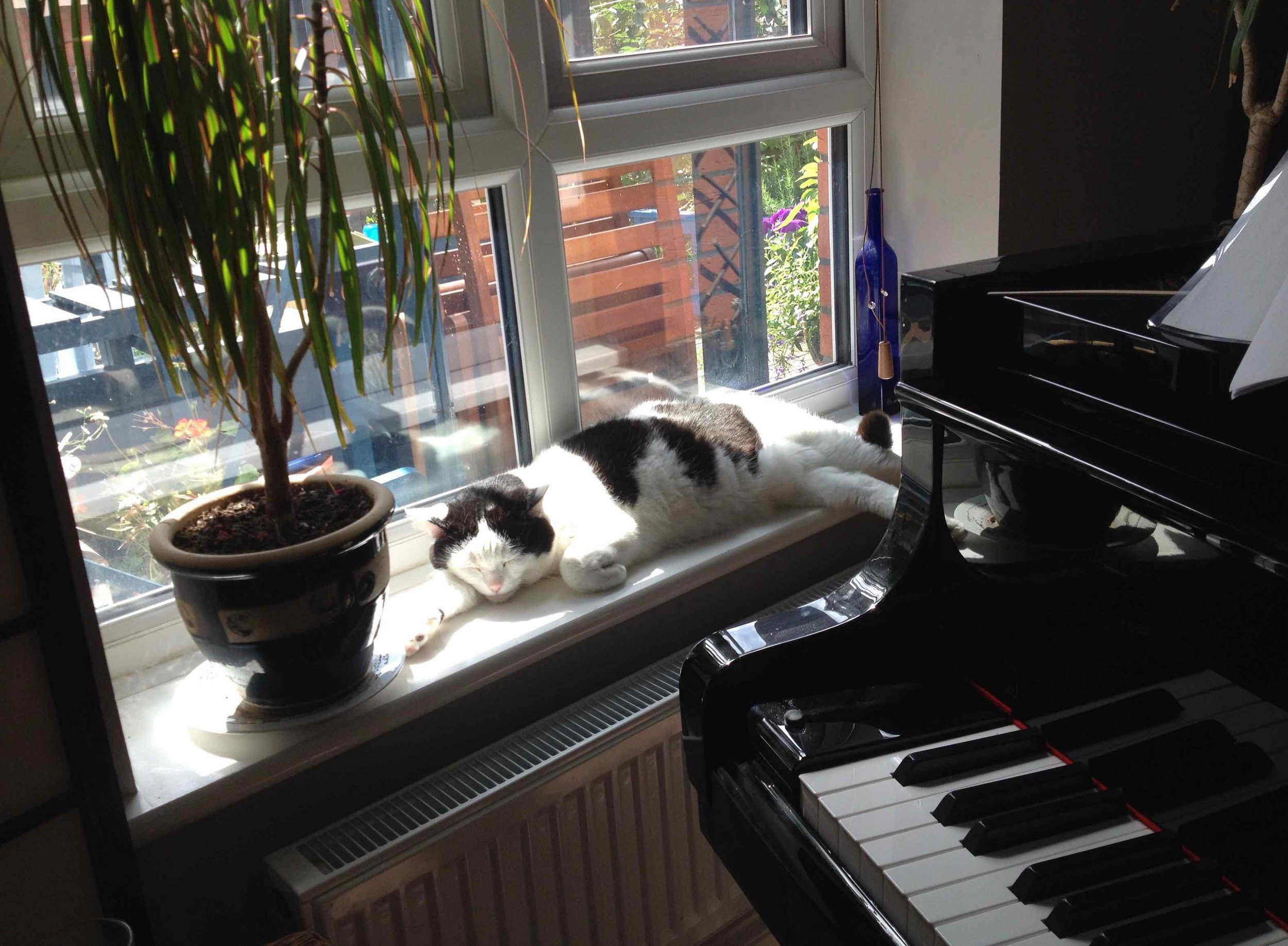 Lucky the cat and Jean's grand piano