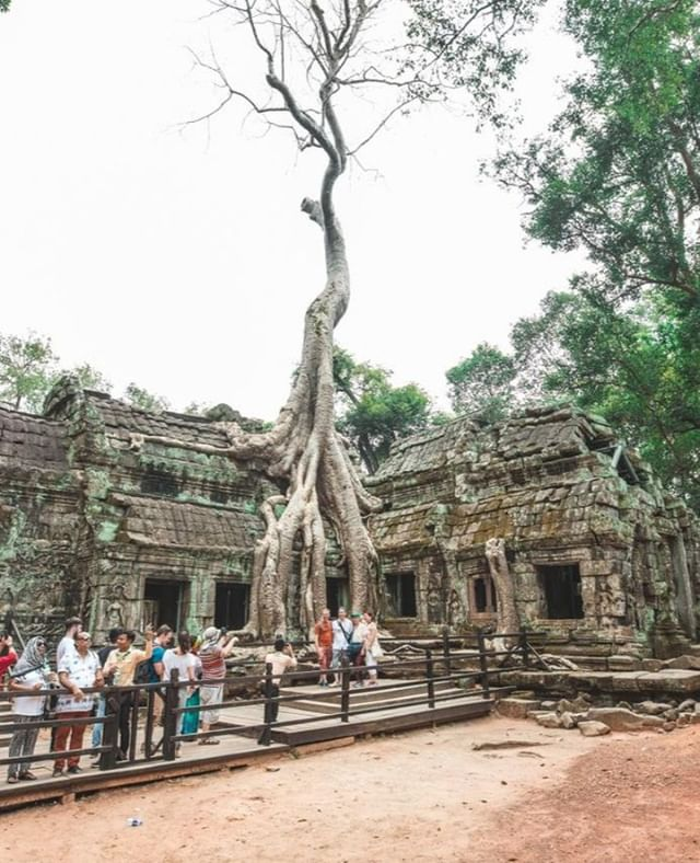Damm that's some strong roots! @aktravel_usa ⁣ ⁣ #cambodia #roots #temples #exploring #lostinthejungle