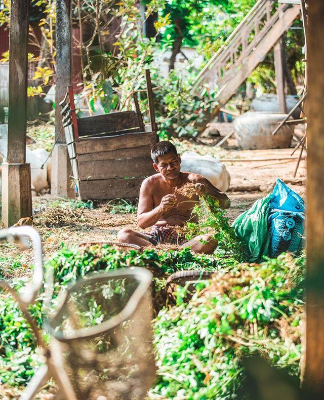 Appreciating the process behind a peanut! #cambodia #peanuts