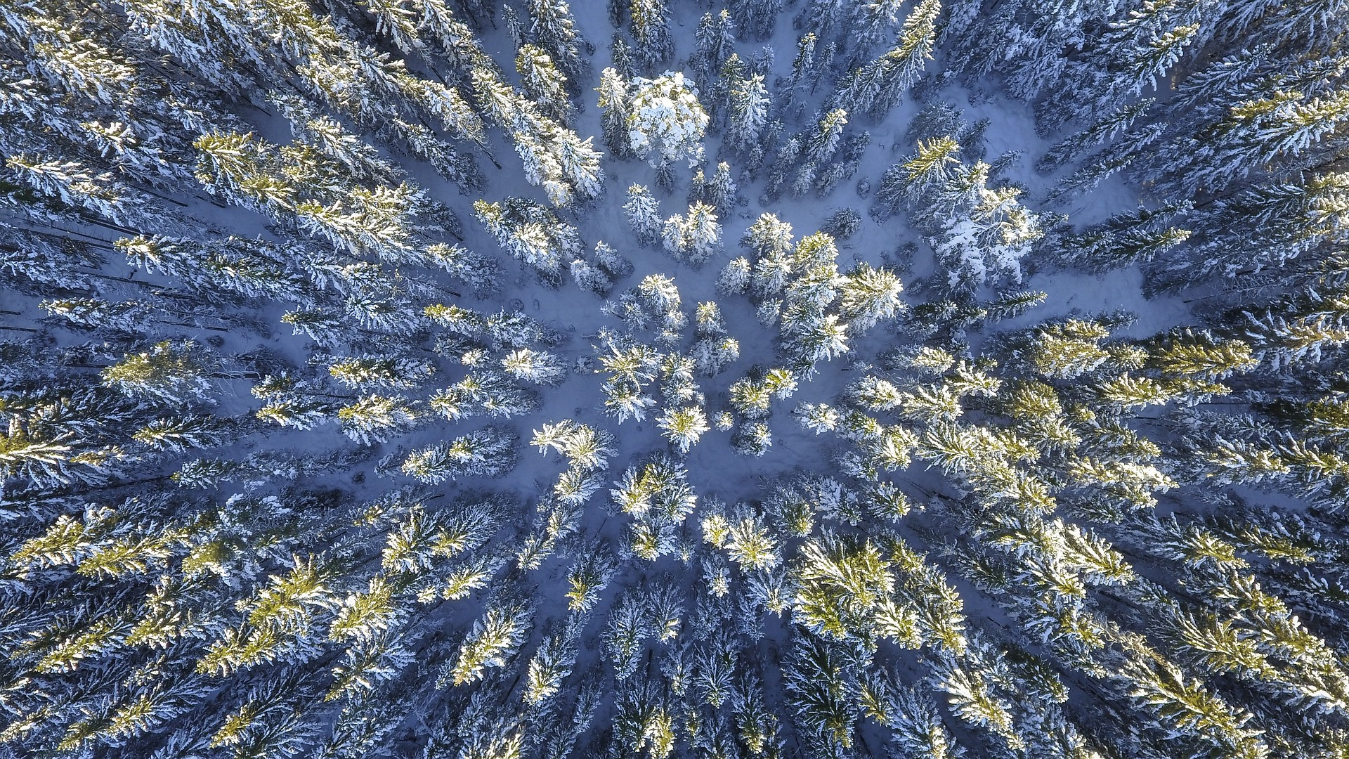 forest-2118320_1920.jpg
