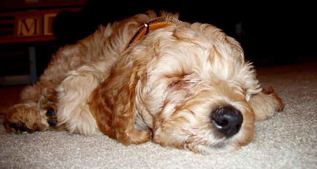 NellieSleeping8weeks.jpg